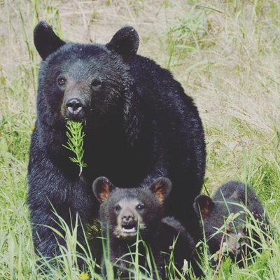 Episode 194 - Bears